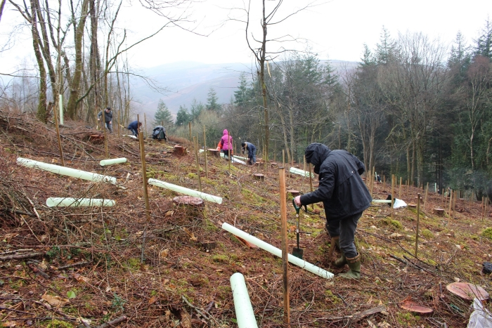 Planting of 87.5 hectares of new native UK woodland
